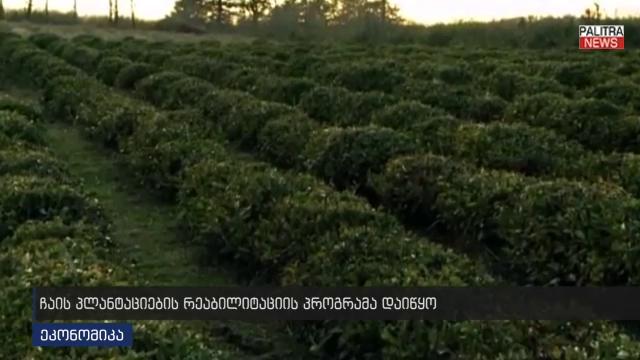 ჩაის პლანტაციების რეაბილიტაციის პროგრამა დაიწყო