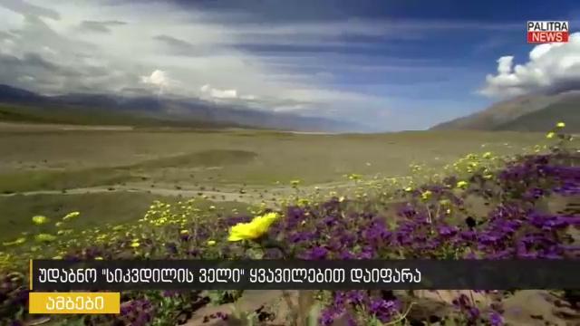"""""""სიკვდილის ველი"""" - ყველაზე ცხელი ადგილი ველური ყვავილებით დაიფარა"""