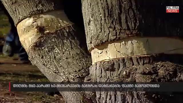 ხე-მცენარეების განზრახ დაზიანების ფაქტი დიღმის ტყე-პარკში - სპეციალისტები შემთხვევის ადგილზე