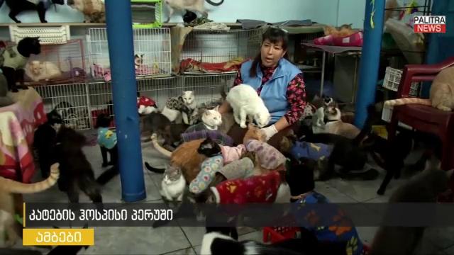 მძიმე სენით დაავადებულ 175 კატას ქალი საკუთარ სახლში უვლის - კატების ჰოსპისი პერუში