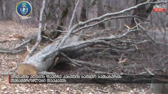 ხე-ტყის უკანონოდ მოჭრის ნებართვისთვის ქრთამის აღებაზე კახეთის სატყეოს თანამშრომლები დააკავეს