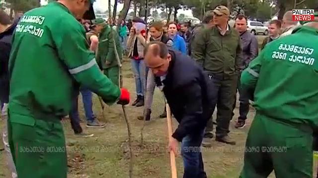 ნარმანია გამწვანების აქციაში - მახათას მთაზე 2000 ფოთლოვანი ხე დაირგო
