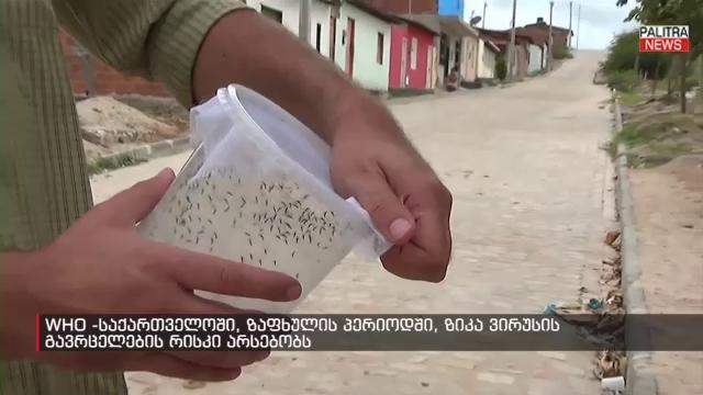 საქართველოში ზაფხულში ზიკა ვირუსის გავრცელების რისკი არსებობს - მსოფლიო ჯანდაცვის ორგანიზაციის დასკვნა