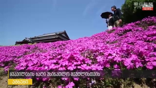 იასამნისფერი სურნელოვანი ბაღი უსინათლო მეუღლისთვის - იაპონელი მამაკაცის საჩუქარი ბევრ მნახველს იზიდავს