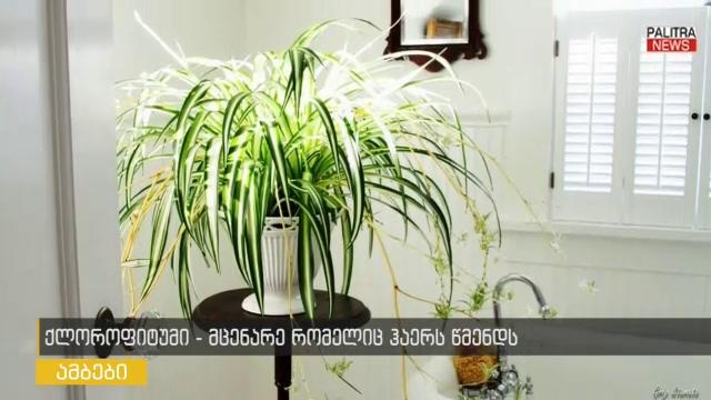 ოთახის მცენარე, რომელიც ჰაერს წმენდს