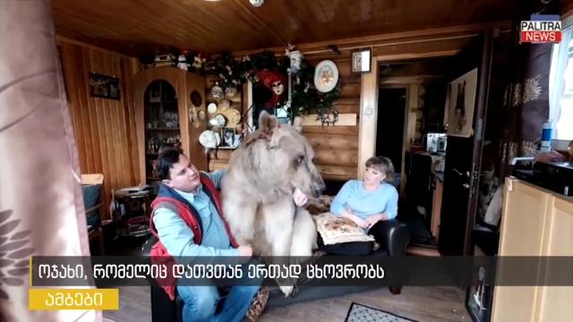 ოჯახი, რომელიც დათვთან ერთად ცხოვრობს