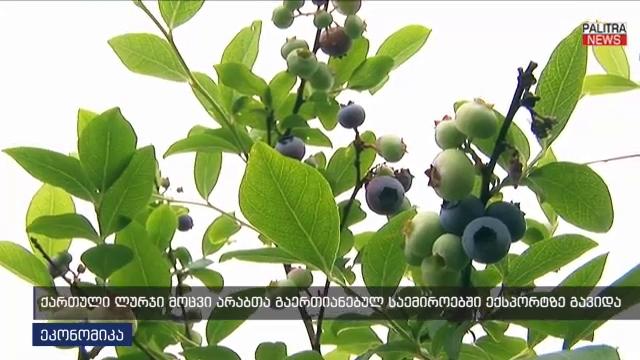 ქართული ლურჯი მოცვი არაბთა გაერთიანებულ საემიროებში ექსპორტზე გავიდა