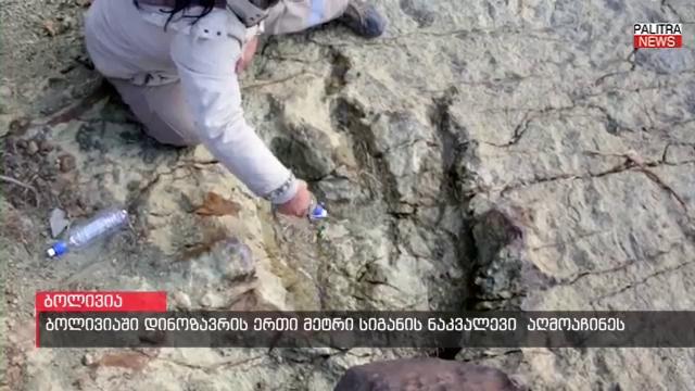 ბოლივიაში დინოზავრის 80 მილიონი წლის წინანდელი, ყველაზე დიდი, 1 მეტრის სიგანის ნაკვალევი აღმოაჩინეს