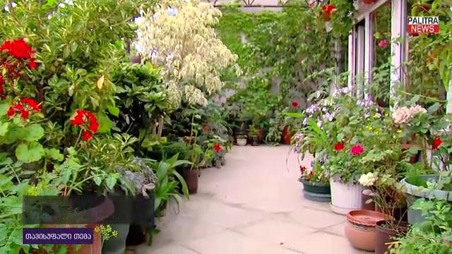 ულამაზესი ბაღი თბილისში, მე-11 სართულზე