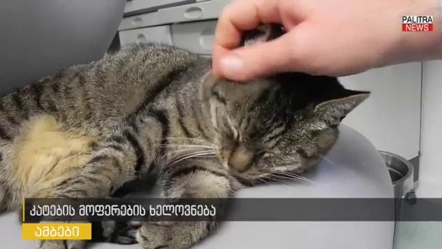 დაეუფლეთ კატების მოფერების ხელოვნებას