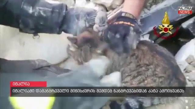 17 დღე ნანგრევებში - კატა, რომელიც იტალიის მიწისძვრისას სახლის ქვეშ მოჰყვა მეხანძრეებმა ამოიყვანეს